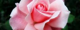 BODAS REALES - Lluvia, rosas y horarios muy estrictos para el gran día